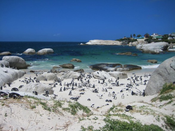 Strand in Simon's Town: Boulders Beach